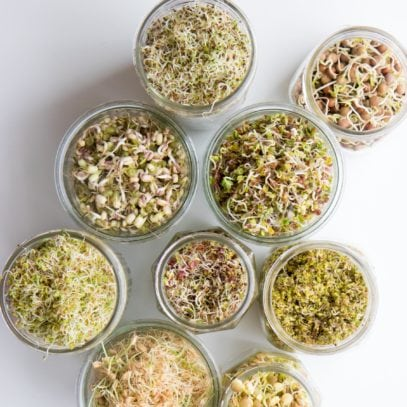 Overhead shot of various types of sprouts in mason jars, including lentils, alfalfa, clover, mung bean, wheat, radish, pea, and mustard