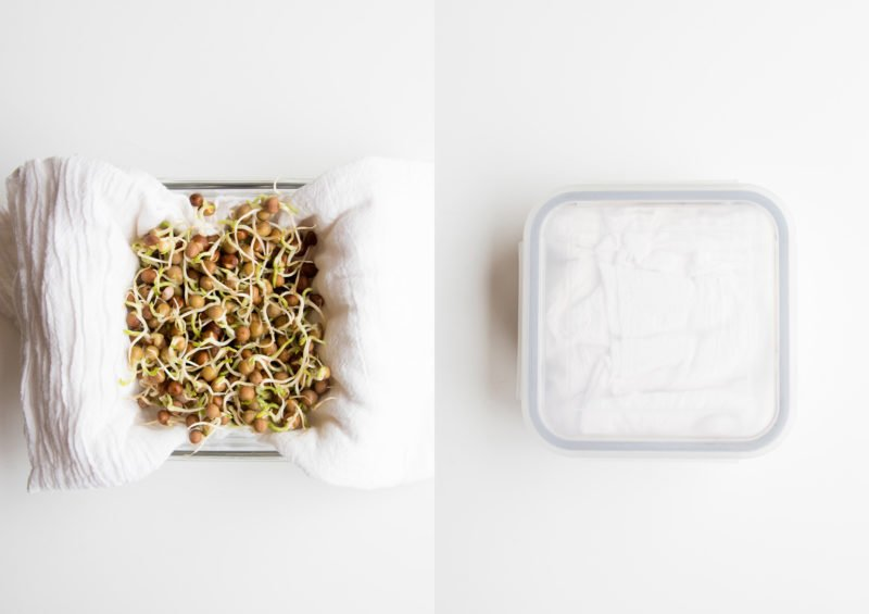 Overhead split shot - on the left, pea sprouts on a tea towel in a glass container; on the right, the container sealed around the sprouts and towel