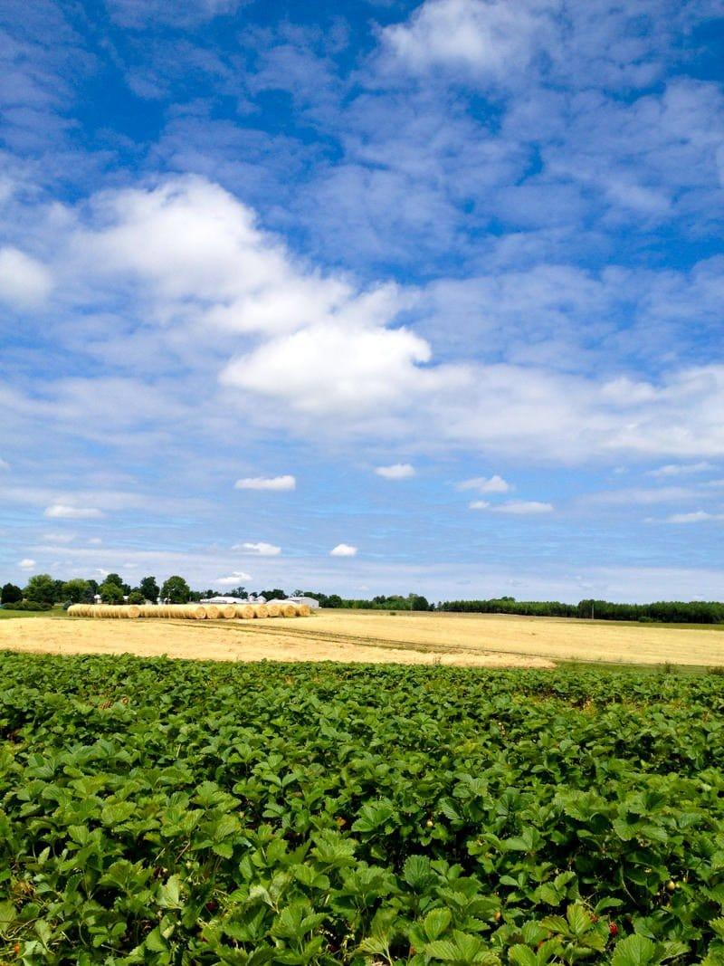 hubers sky field stock