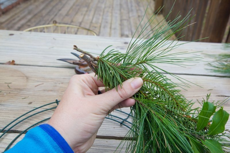 Hand holding evergreen sprigs to place on a wreath form