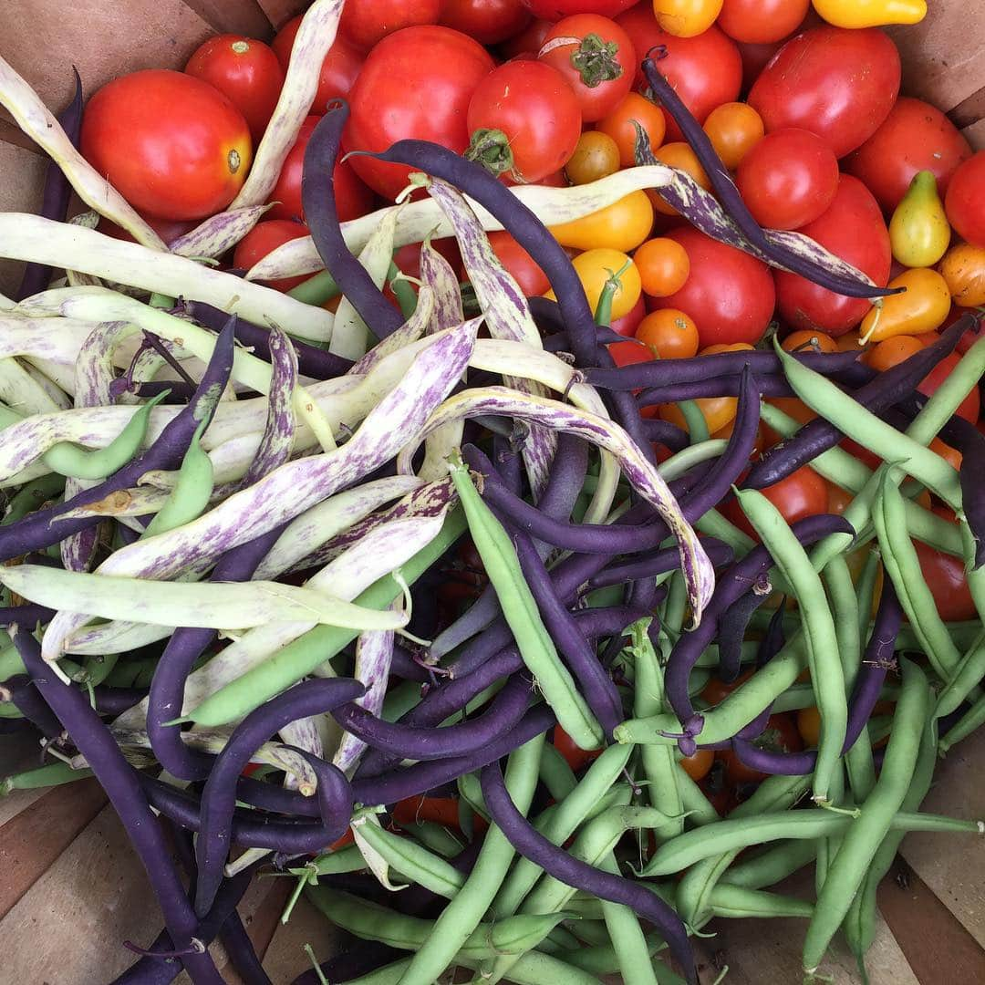 Beans and Tomatoes Garden