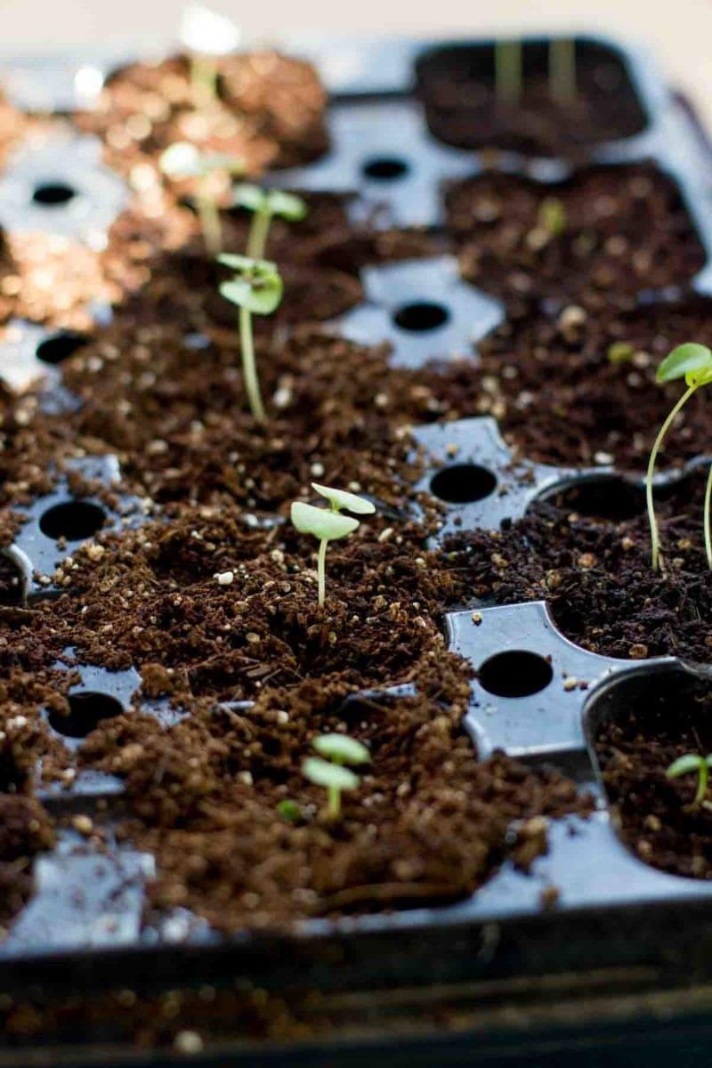 Garden Sprouts