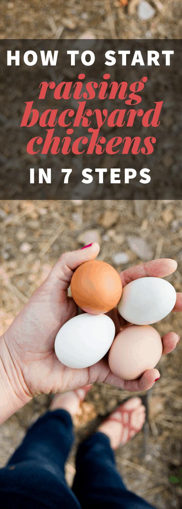 How to Start Raising Backyard Chickens in 7 Steps