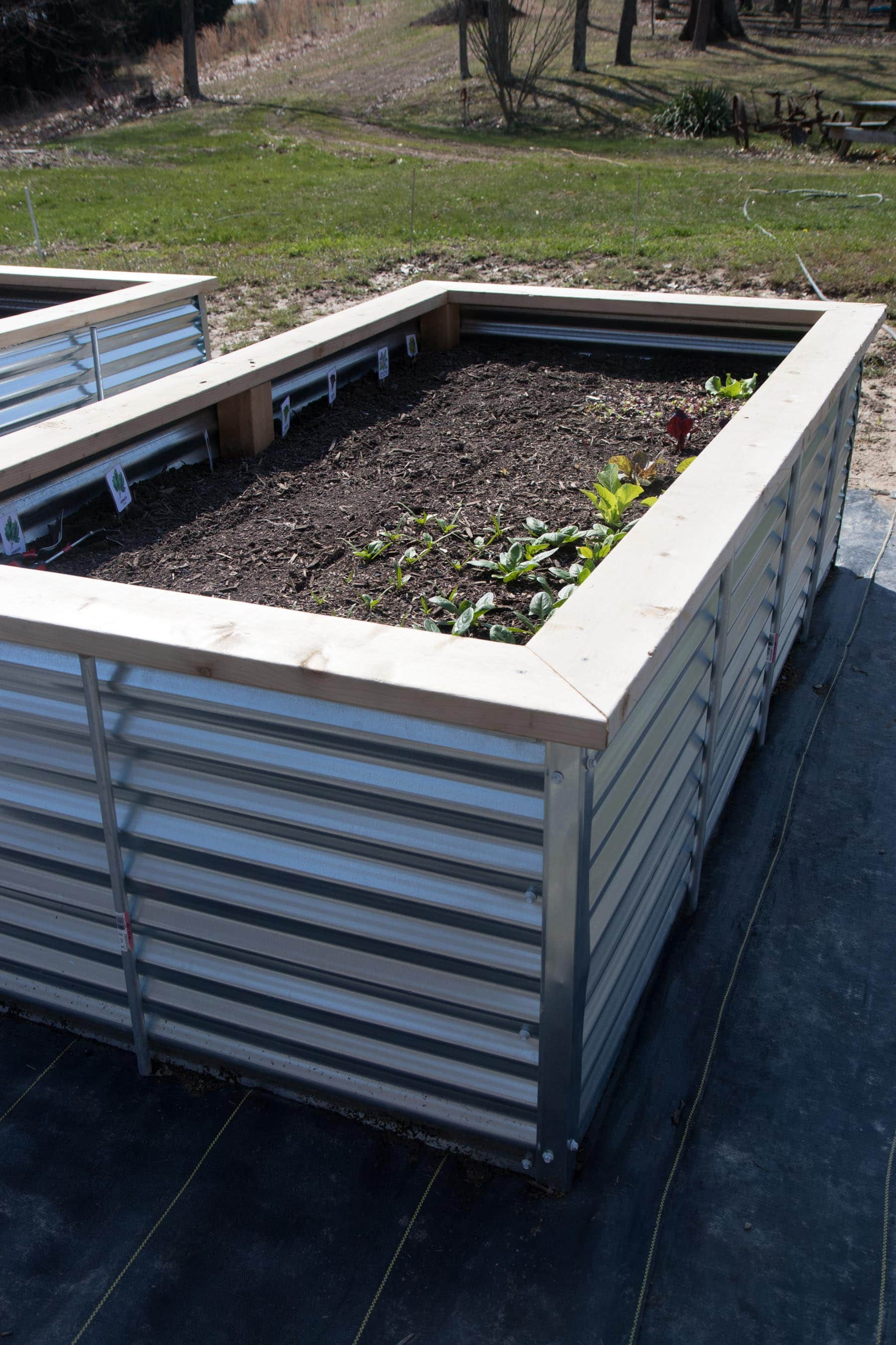 Side Angle Shot Of A Galvanized Steel Raised Bed Planted With Greens