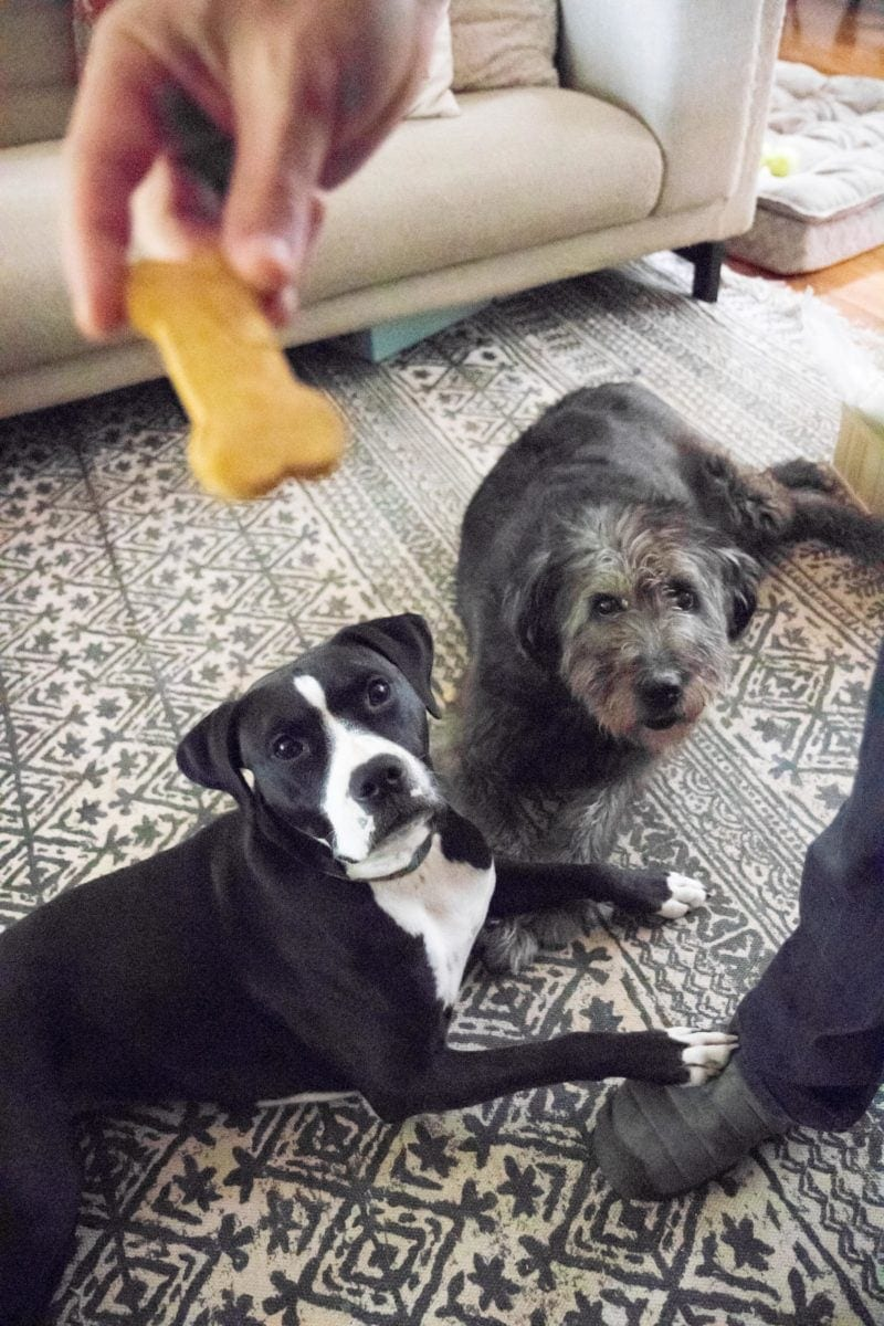 Two dogs laying on a black and white rug, looking up at a treat being held in the air
