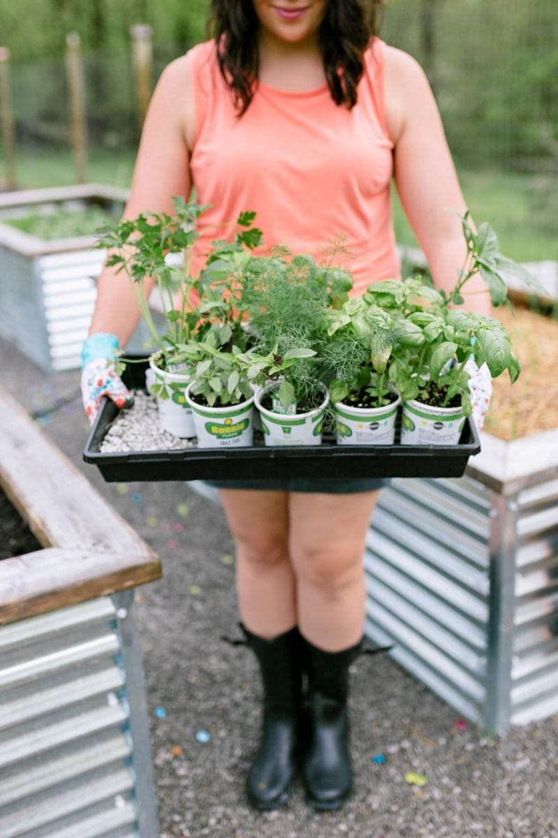 Woman holding a tray full of vegetable seedlings for organic vegetable gardening.