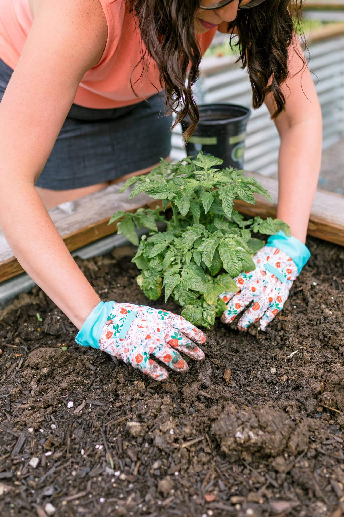 Woman in gardening gloves putting a tomato seedling into the ground for her organic vegetable garden.