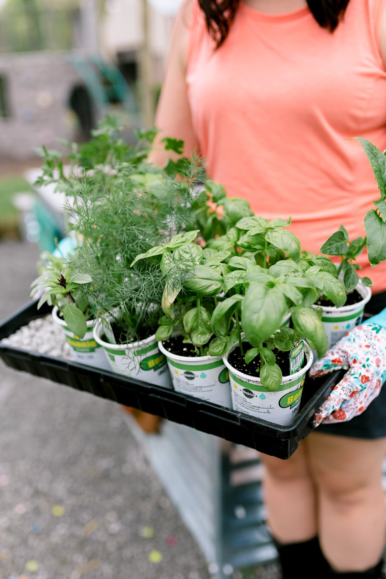 Torso of a woman holding a tray full of seedlings for a vegetable garden