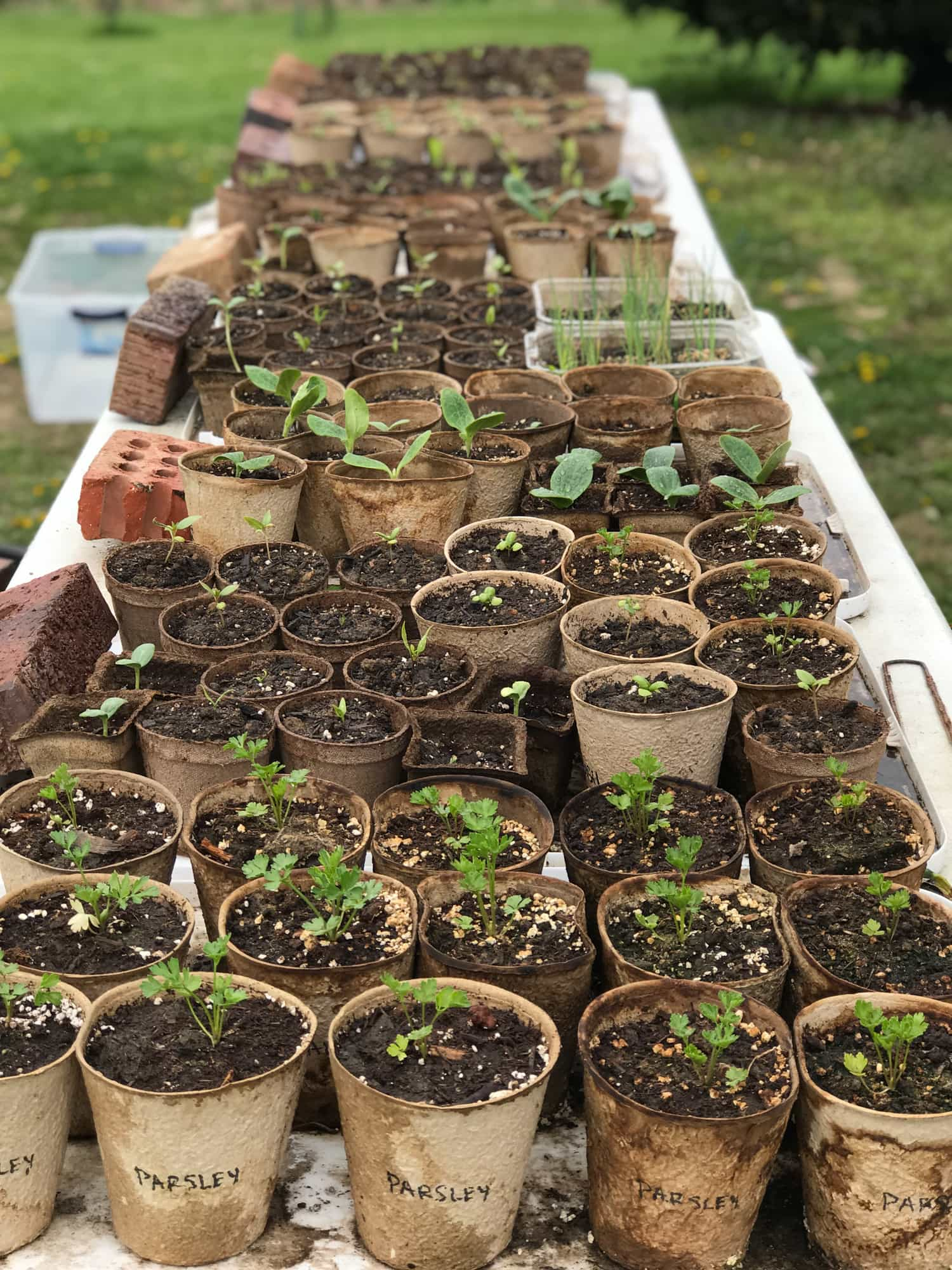 Table filled with containers of seedlings for a vegetable garden.